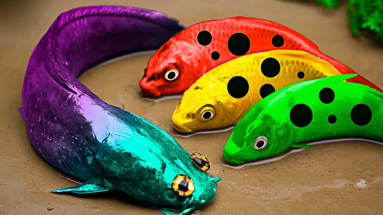 Rescue The Colorful Carp From The Cuckoo Prison - Primitive Cooking - Stop Motion Asmr Coco
