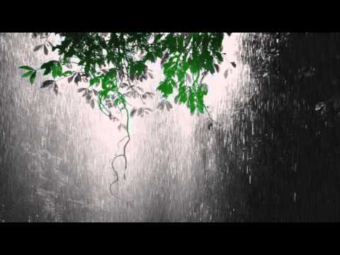 Nature Sounds: Rainforest Sounds with Distant Thunder