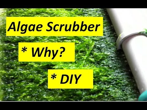 Algae Scrubber- What is it? Why install one?, and DIY Instructions