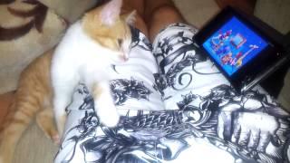 кот смотреть спокойной ночи малыши и засыпает