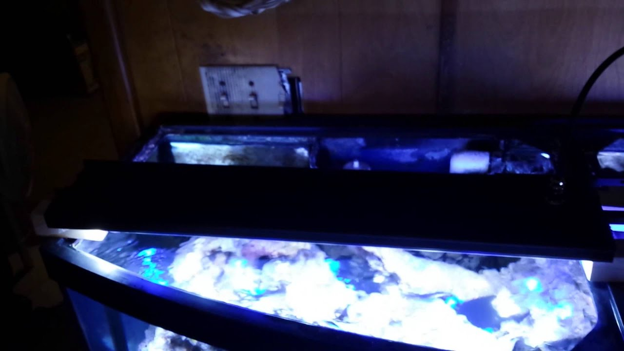 DSunY LED aquarium light-- Programmable,Ultra Thin,Dasiy-chain ...