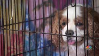 Volunteers Care For Pets Separated From Families After Devastating Camp Fire | NBC Nightly News