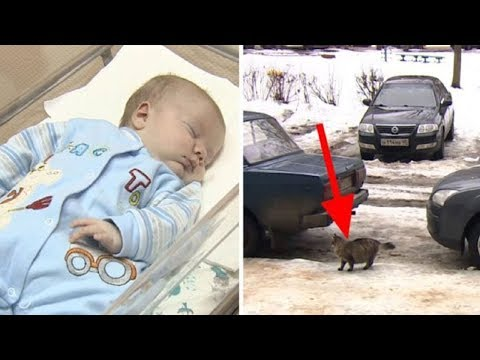 Stray Cat's Quick Thinking Saves Abandoned Baby Left In A Box In The Freezing Cold