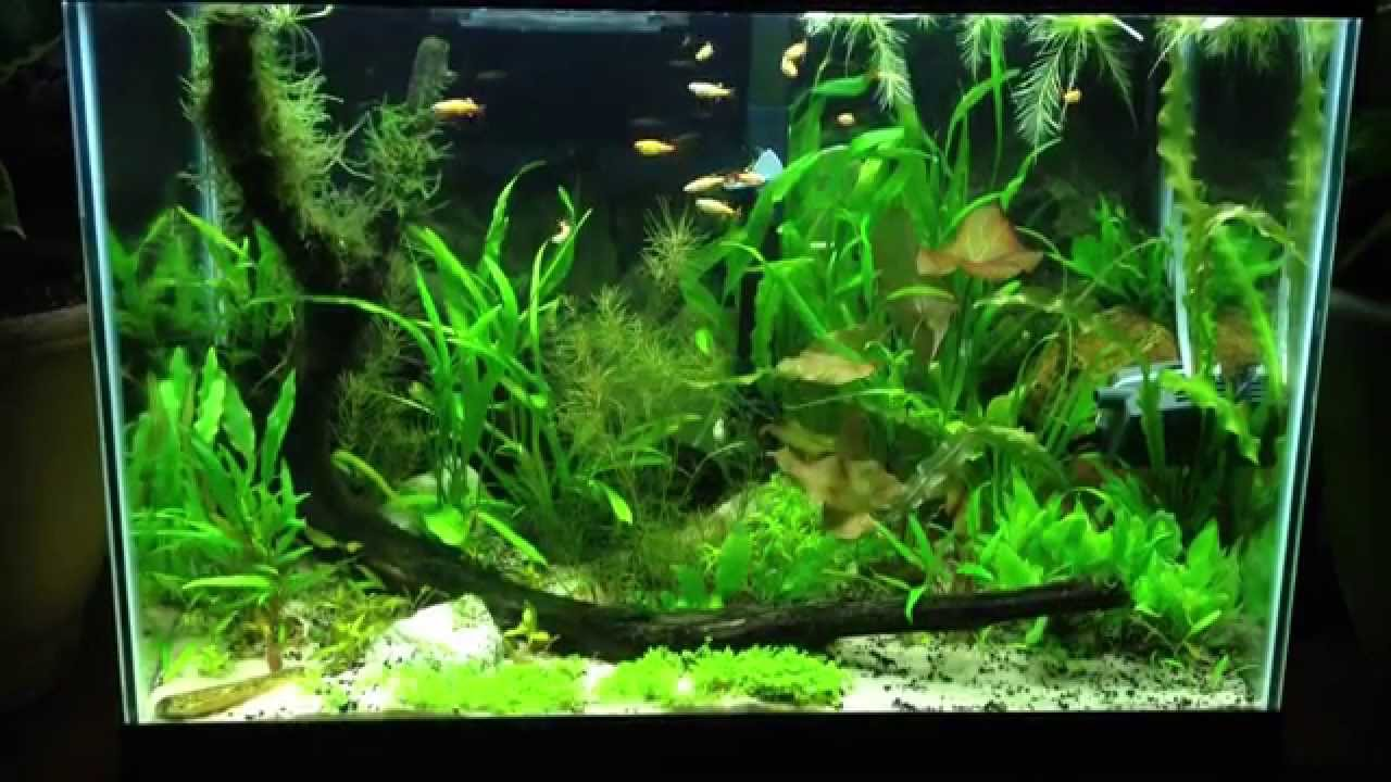 20 Gallon Planted Aquarium   YouTube