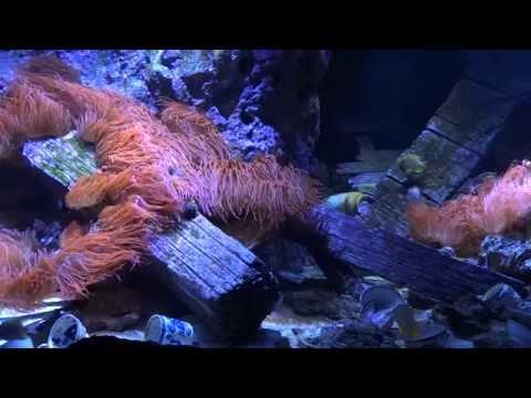 8 hrs Aquarium screensaver 1080p