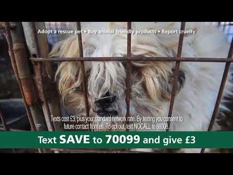 Help save animals around the globe today