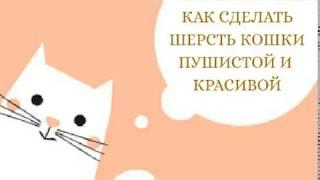 Как сделать шерсть кошки пушистой и красивой/ уход за питомцем