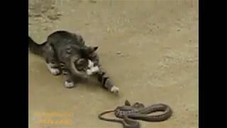 кошка и змея, 2017, interesting video, new fails