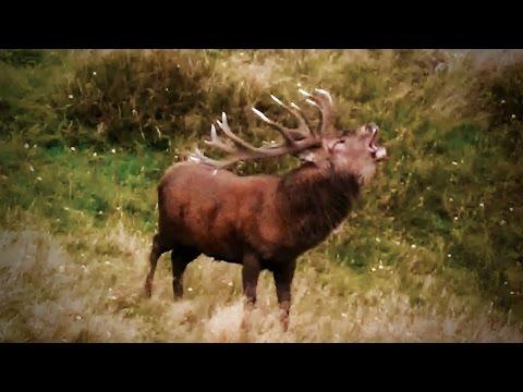 Hunting Red deer in New Zealand part 115(Trophy hunt)