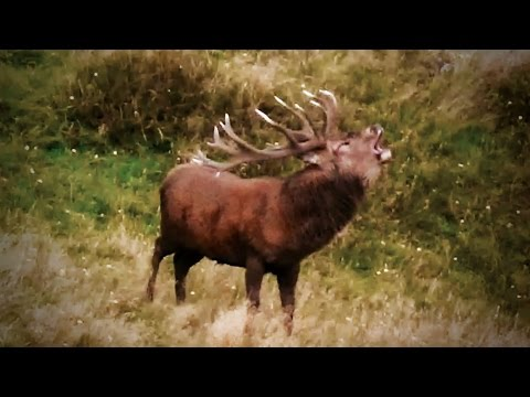 #waikarimoana Hunting Red Deer In New Zealand Part 115(Trophy Hunt)