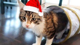 CAT CHRISTMAS!!