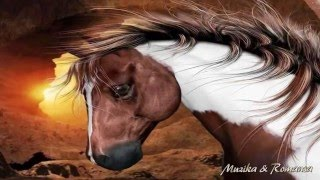 Tornero ღ Beautiful Horses ღ