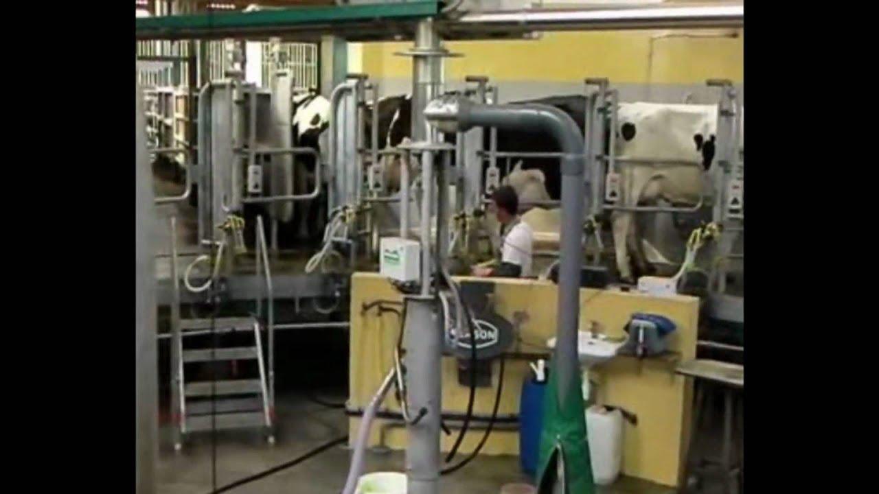 Salle de traite roto24   arrivée des vaches.wmv   youtube