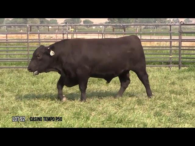 Dal Porto Livestock and Rancho Casino Lot 92