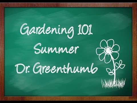 """""""How to grow Globe Thistle"""" Gardening 101 by Dr. Greenthumb"""