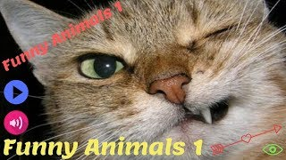 FORGET CATS! Funny ANIMALS are WAY FUNNIER! -LAUGHING ANIMAL VIDEOS -Best  Animal Videos Collection