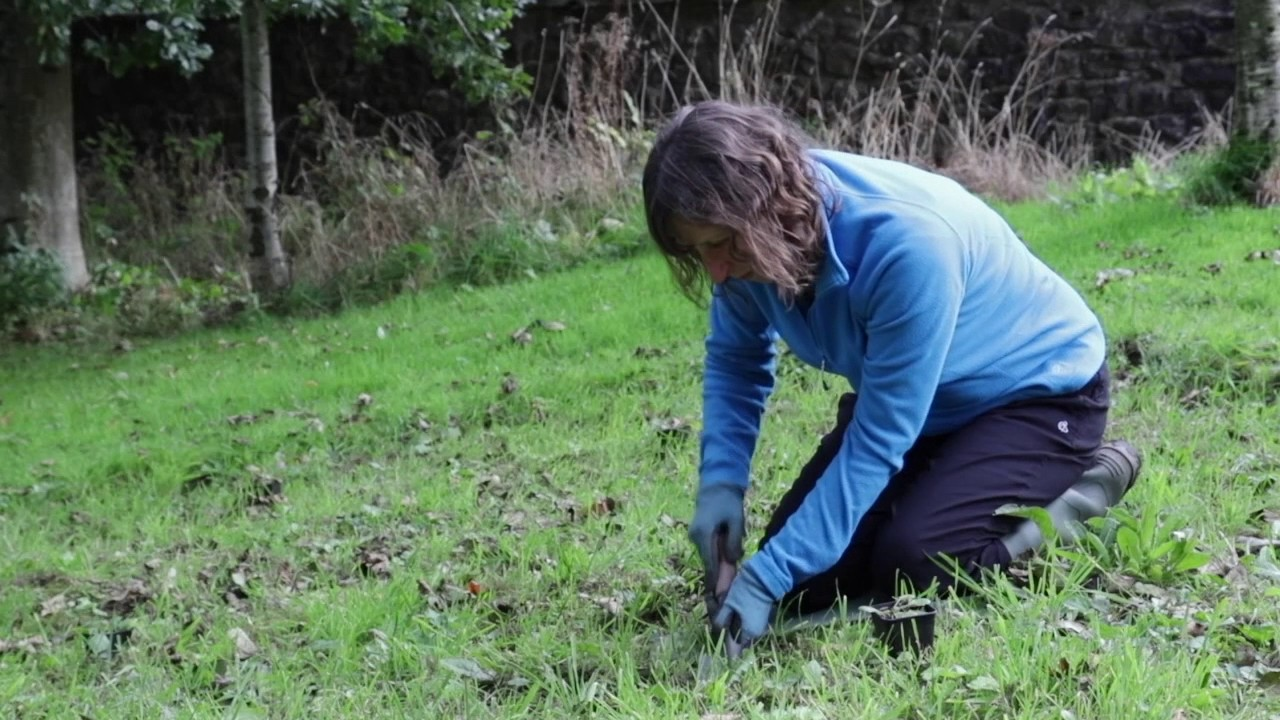 4  how to plant out wildflower plug plants to create a wildflower meadow or garden