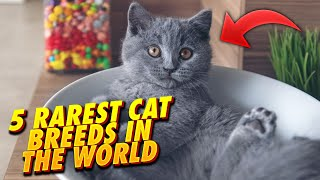 5 Rarest Cat Breeds In The World