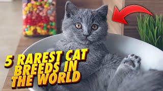 5 Rarest Cat Breeds In The World