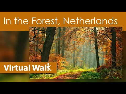 Virtual Walk In the Forest In HD - Jog In Woodlands With Bird Song