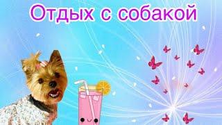 VLOG: отдых с собакой в Астрахани // Жуткая жара // Кормим собачек