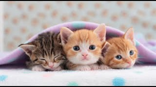 Funny Cats and Kittens lovely - Part 1