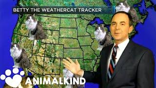 House cat photobombs weather forecast | Animalkind