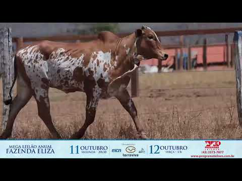 LOTE 171