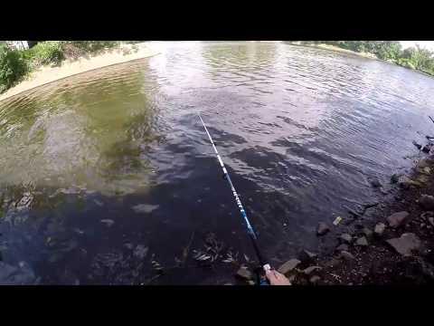 Passaic River Pike Fishing NJ