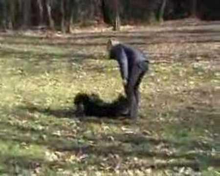 Lapphund tricks