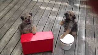 Sonic Tooth: No More Cookies V1 (border Terriers)