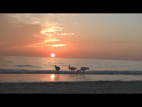 **Relaxing Sunset Florida Beach !