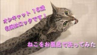 飼っているねこをお風呂に入れました!  ✨ 猫動画初投稿   チャンネル登...
