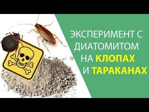 Порошок от клопов и тараканов, о котором мало кто знает. Тест кизельгура (диатомита)