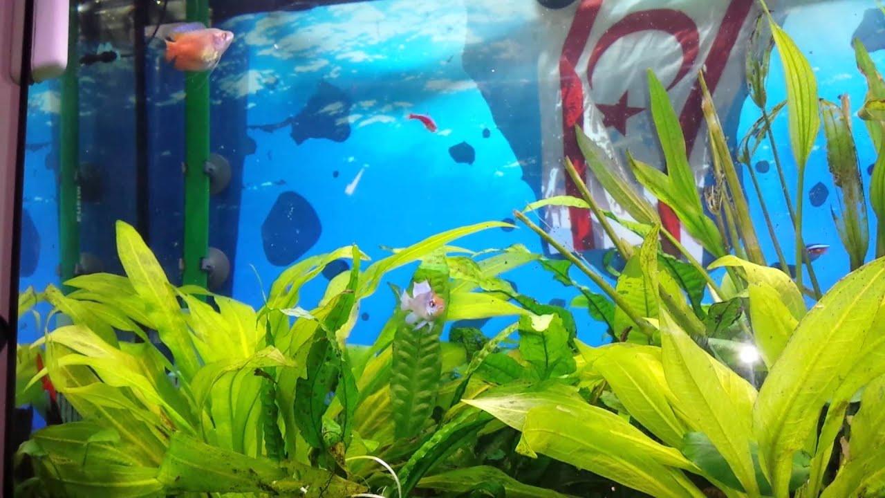 aed44719d3156e Fish feeding on brine shrimp aka sea monkeys - YouTube