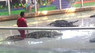 Xiếc cá Sấu chạy tụt cả quần