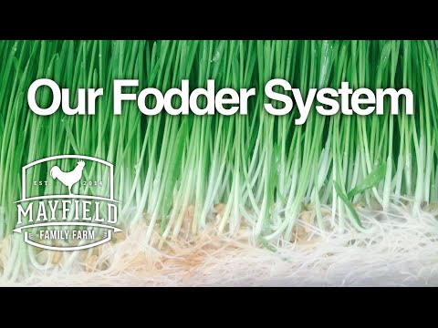 Our Fodder System