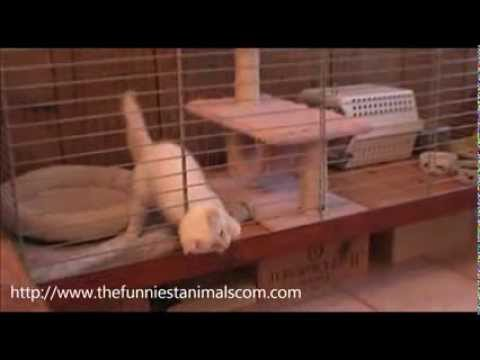 Cats escape from their cage