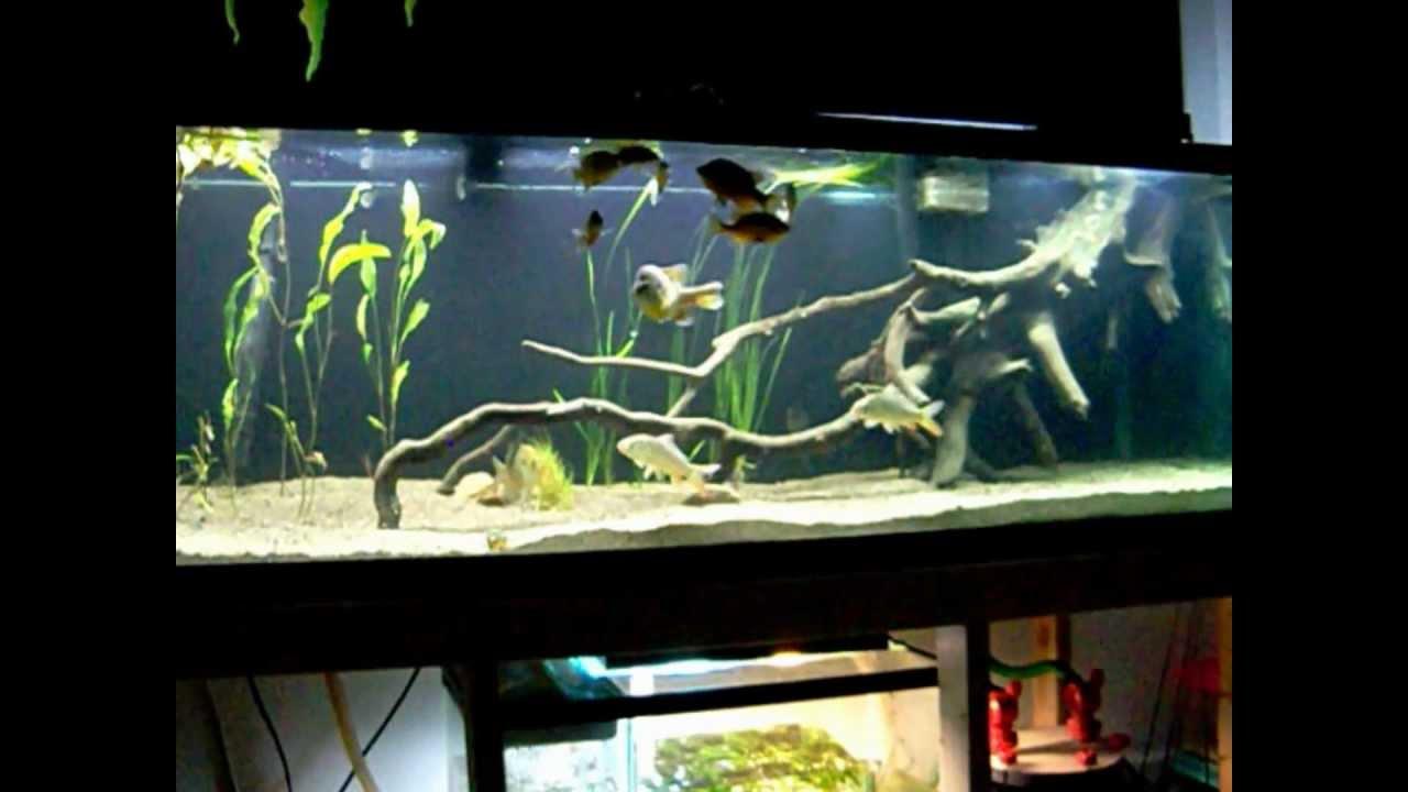 180 Gallon Freshwater Aquarium