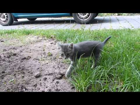Kittens playing - Jonge katjes spelen - Terschelling, the Netherlands