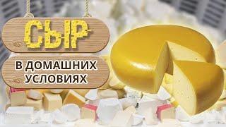 Рецепт домашнего сыра из натурального молока Как сделать сыр в домашних условиях