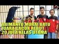 Indo Jaya Cupabimanyu Murai Batu Juara Gacor Rebut  Juta Kelas Utama  Mp3 - Mp4 Download