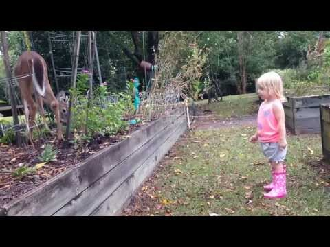 Toddler meets a wild deer who wants to play