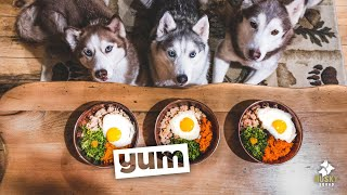 Home Made Dog Food Recipe Turkey and Eggs | Husky Squad