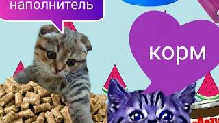 Какой корм для кошек и наполнитель лучше покупать?