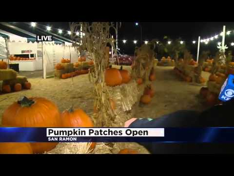 Roberta Gonzales is at Johnny Moore's Pumpkin Patch!