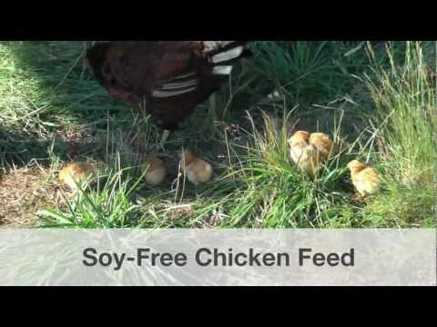 Soy-Free Chicken Feed