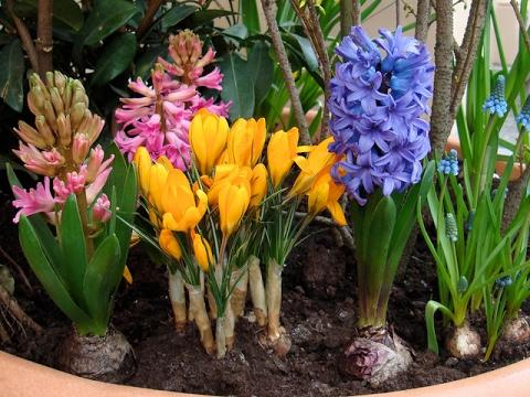 189# Цветочный магазин в Голландии. Комнатные растения и цены.  Часть 2. Цветы. Декор.