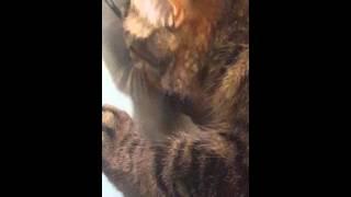 Правильное питание кота 2! Смешно до слез!