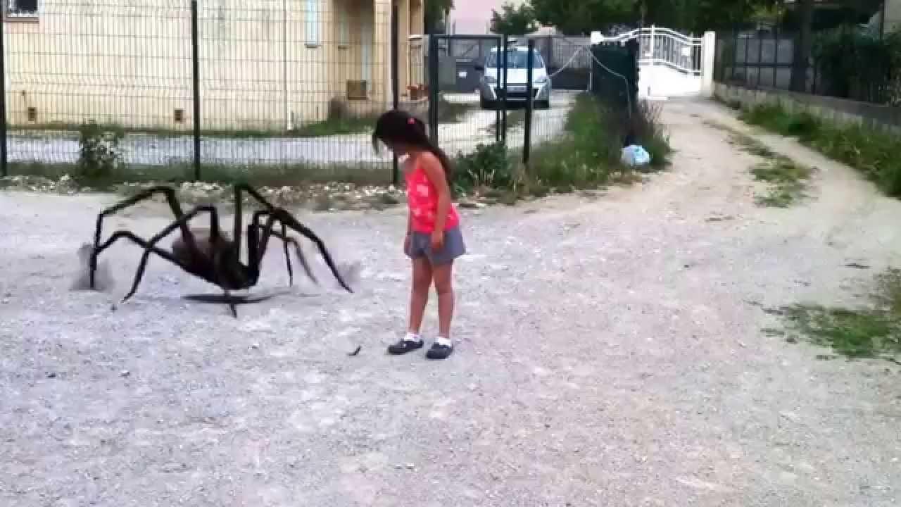 araignées,pas touche. Maxresdefault
